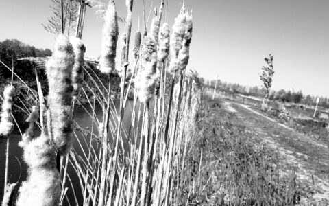 Midwinter en leren van de natuur in Coronatijd